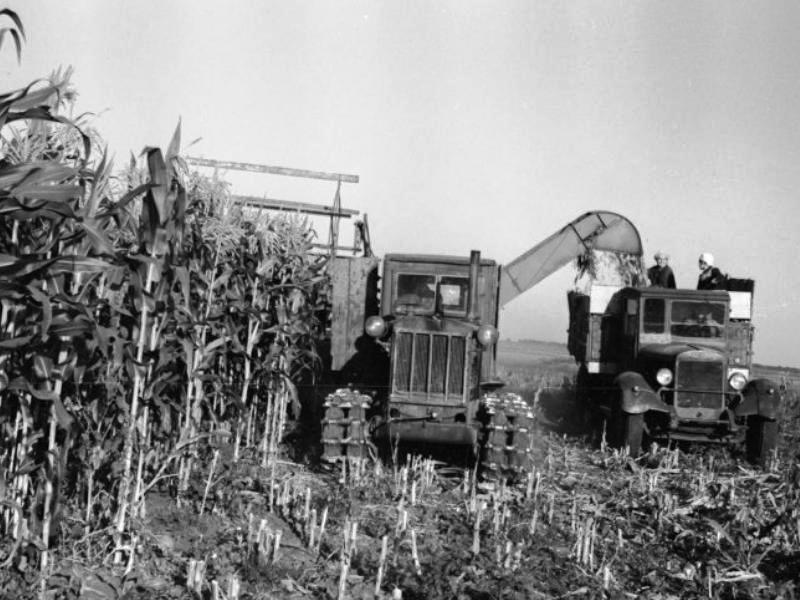 Уборка кукурузы в Минусинском районе, 1958 год, фото Прибура В.С.