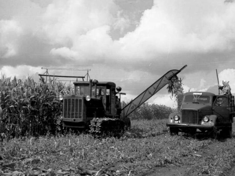 Уборка кукурузы в Минусинском районе, 1961 год, фото Ракчеева В.П.