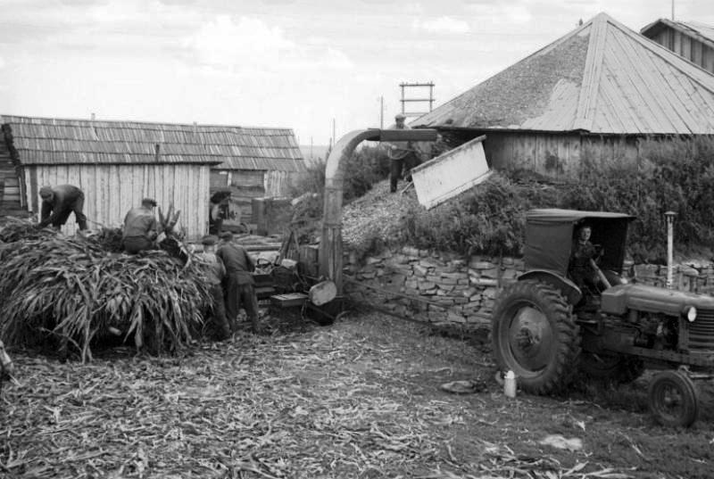 Закладка кукурузы в силосную яму, 1957 год, фото Прибура В.С.