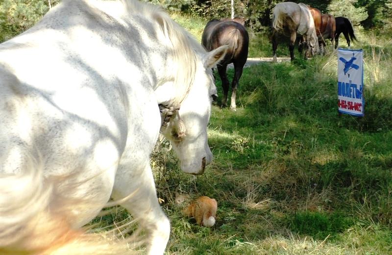 Рыжий кот и белая лошадь