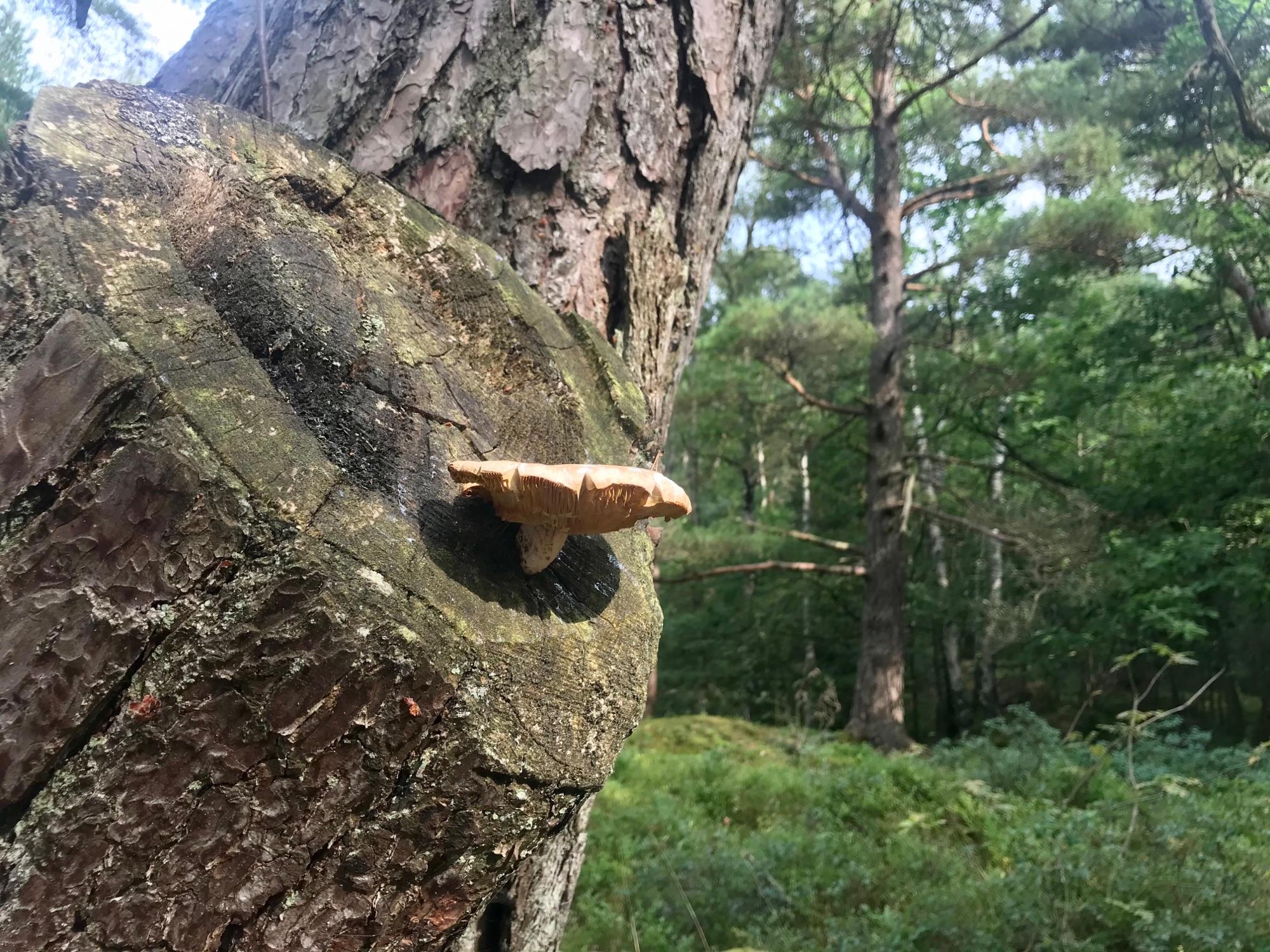 На дереве ближе к дождю
