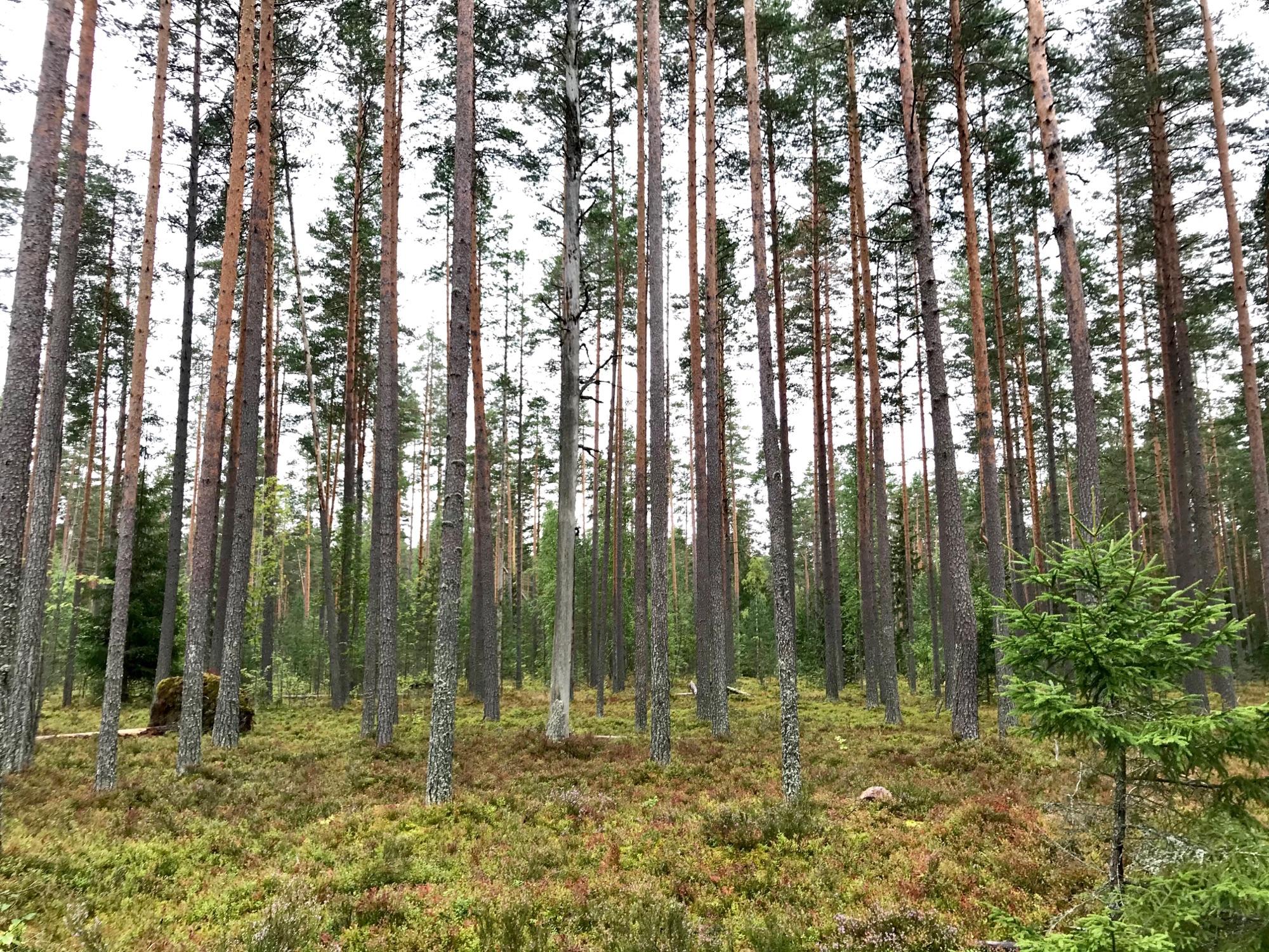 Дикий лес