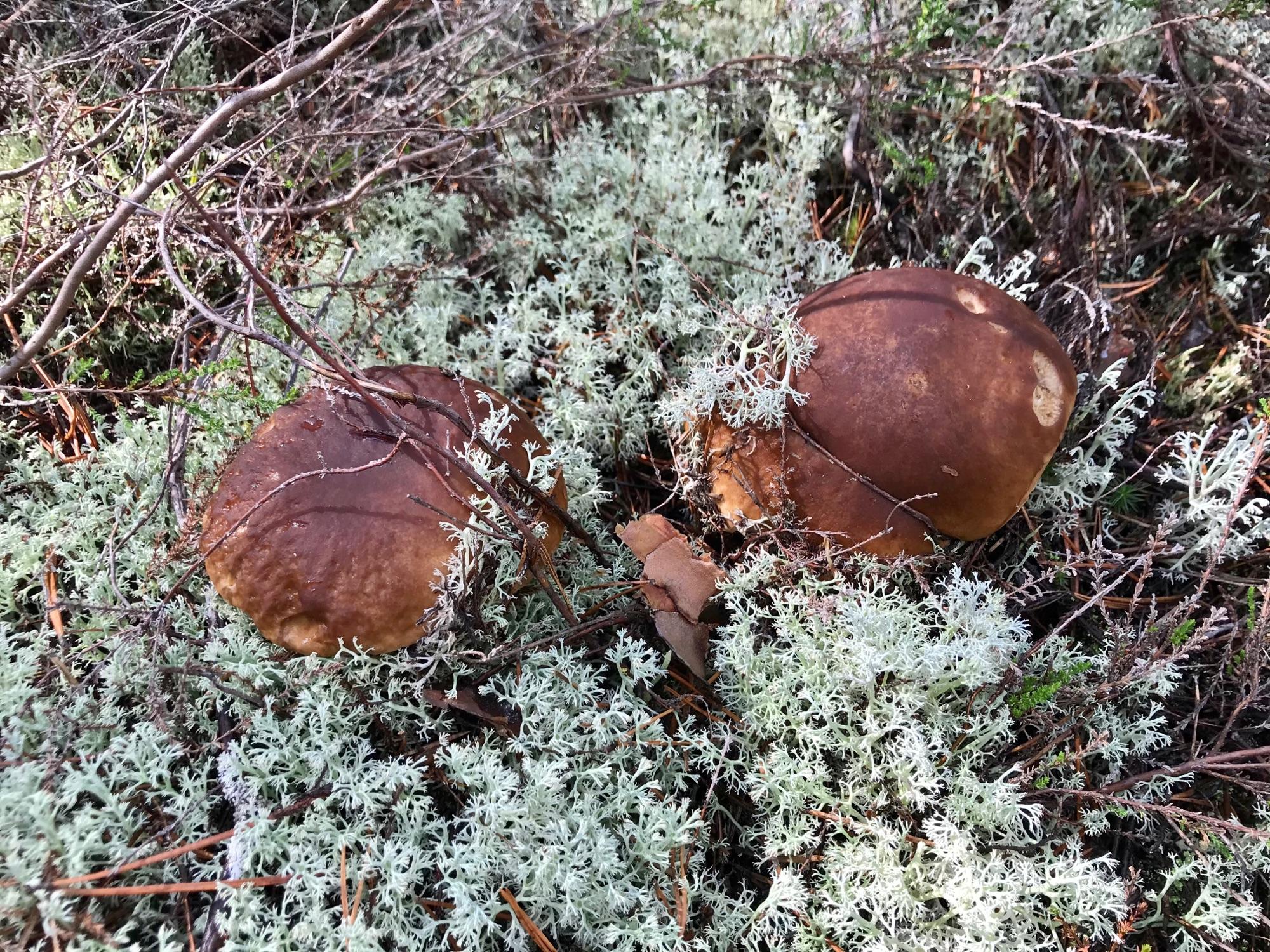 Охота на грибы в идеальном лесу