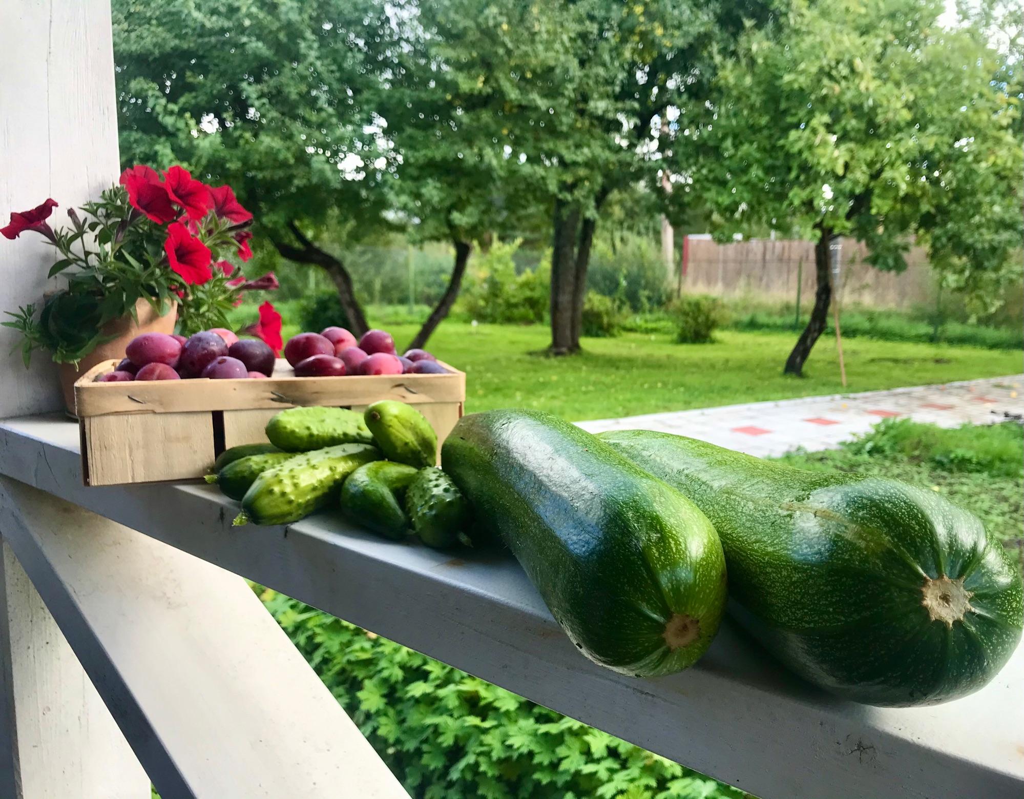 Утренний урожай