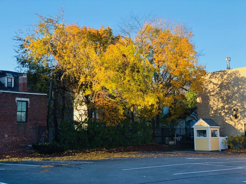 Cambridge_fall_2019 - 5.jpg