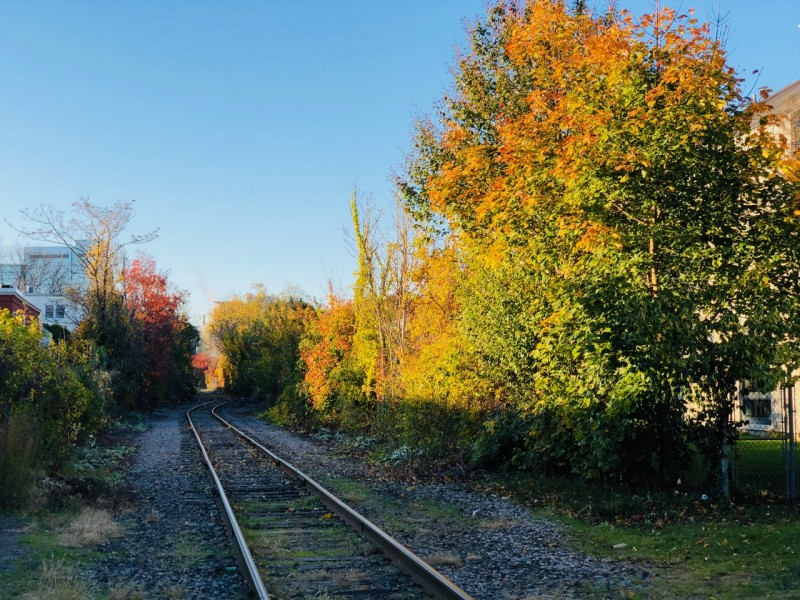 Cambridge_fall_2019 - 1.jpg