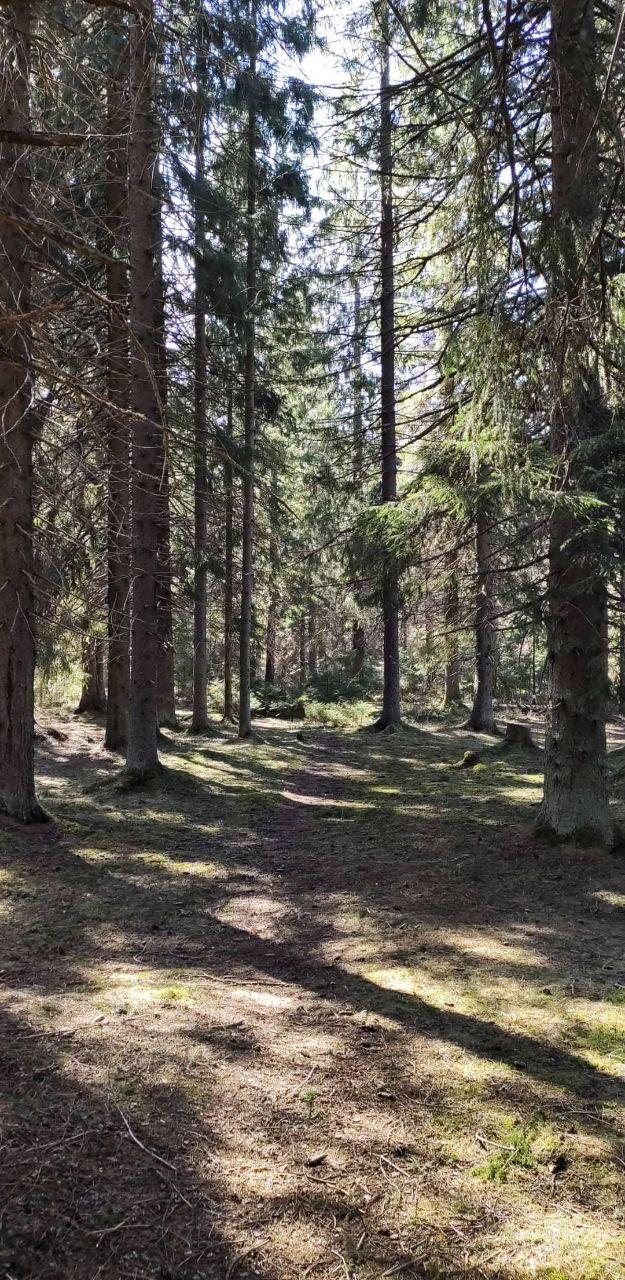 Лес кажется летним и впереди только радость