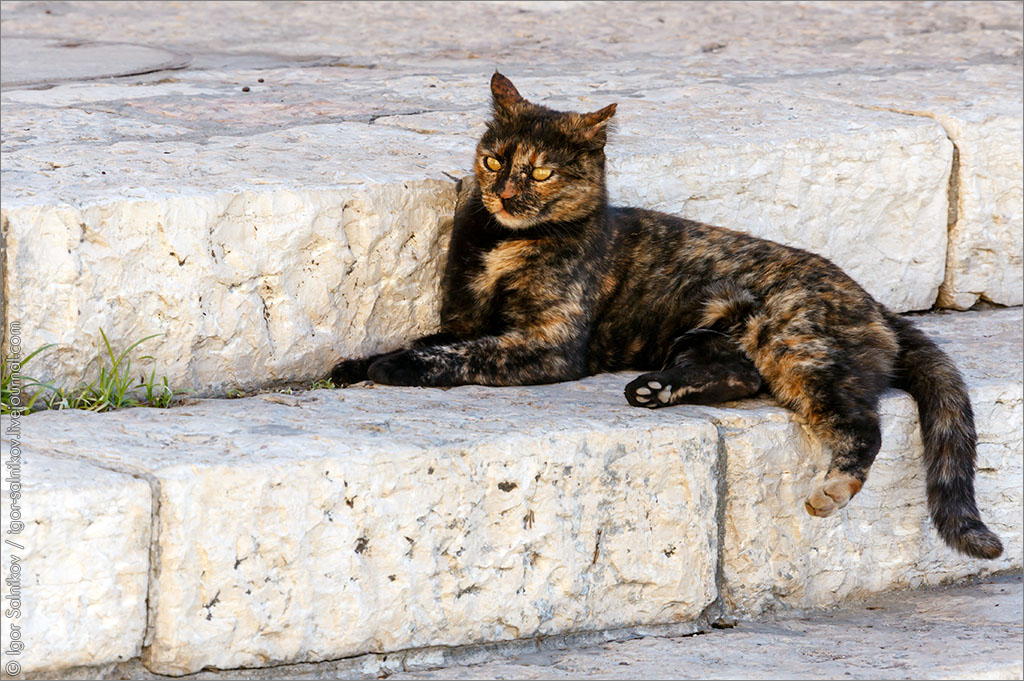 котофото котик кошка котейка Израиль Тель-Авив Яффо