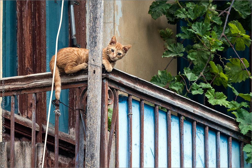 котофото котик кот
