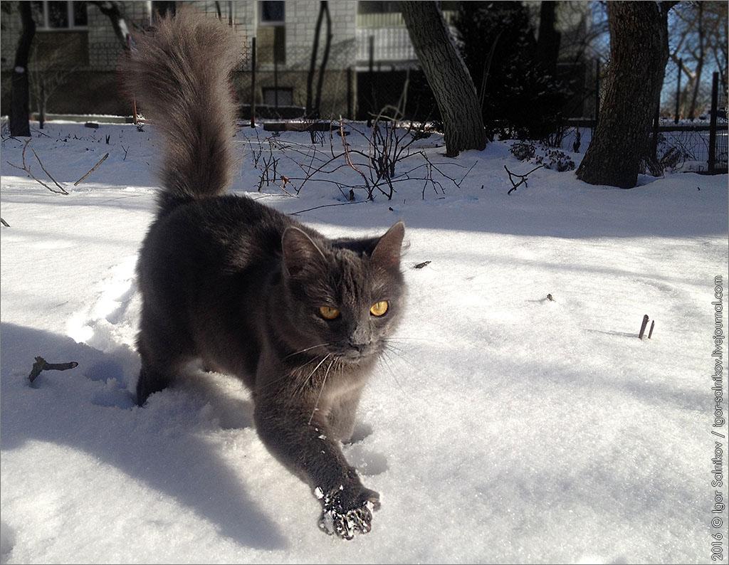 котофото котик