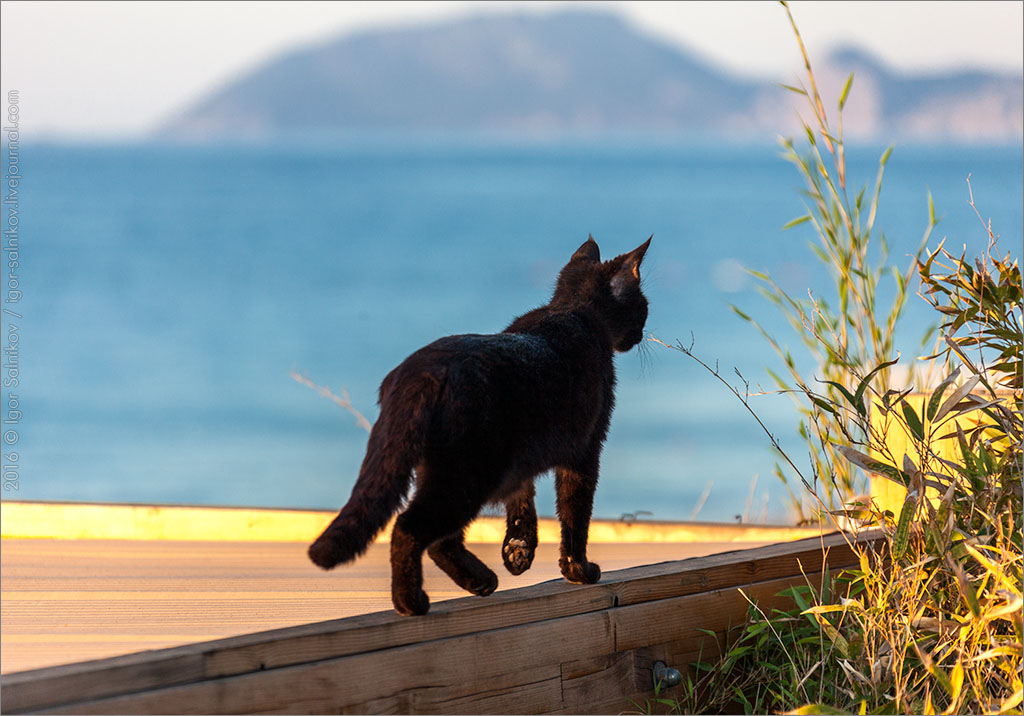 cat кот котик котофото черный кот