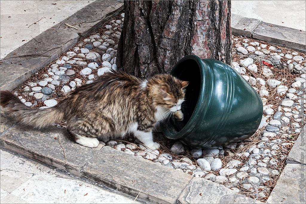 cat кот котик котофото
