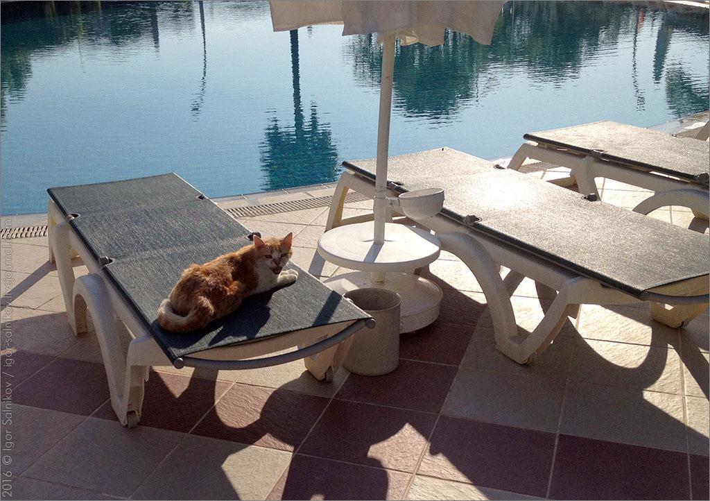 котофото кот котик море Турция отель