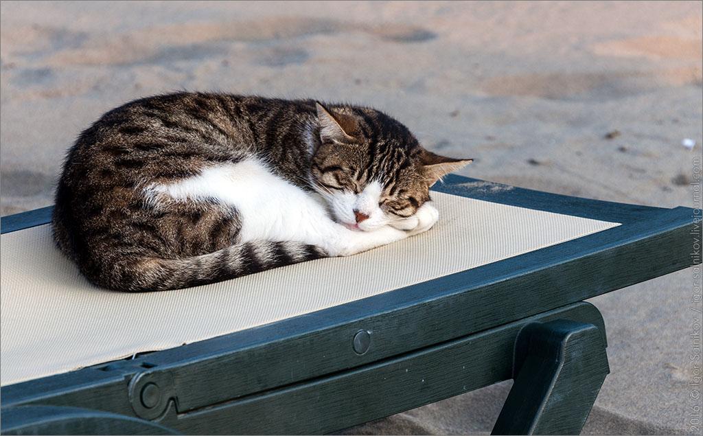 котофото кот кошка