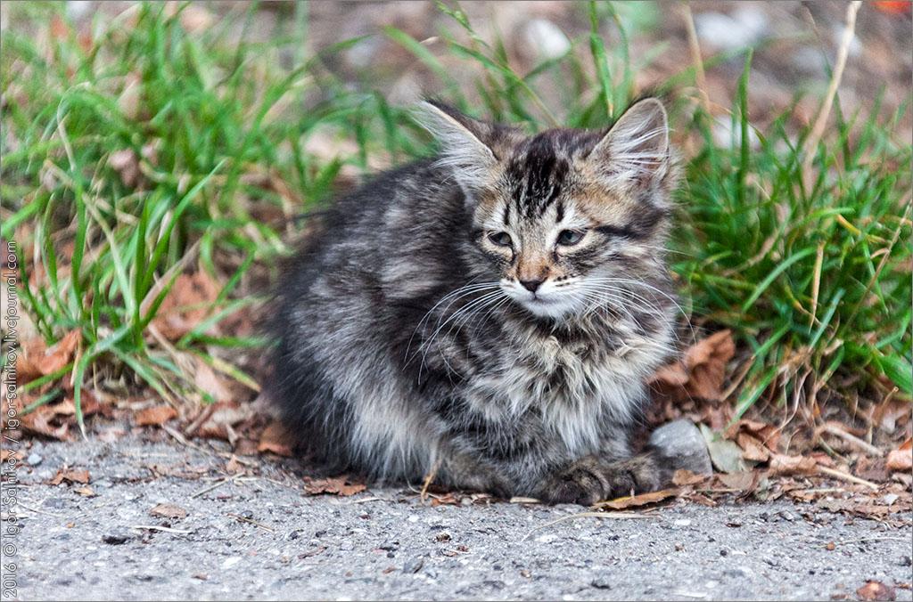 кот кошка котофото котик