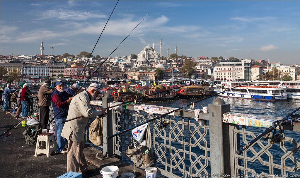 котофото котик Стамбул Галатский мост рыба рыбак Balik Ekmek