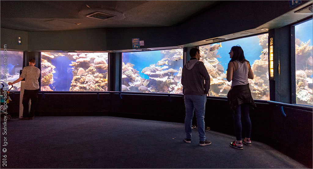 Израиль Эйлат Красное море дельфинарий риф подводная обсерватория