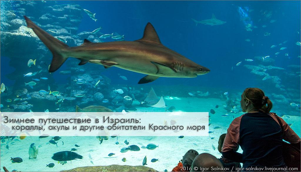 Израиль Эйлат Красное море дельфинарий риф подводная обсерватория акула