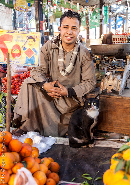 кот котофото котик рынок Египет Хургада