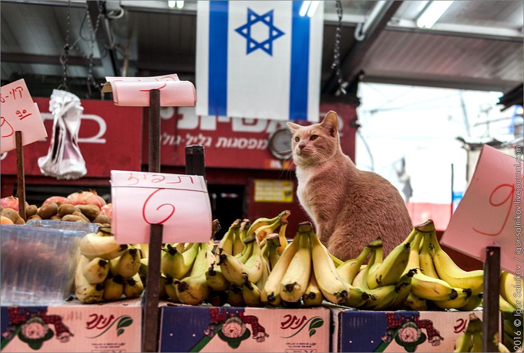 кот котофото Шук Кармель рынок Тель-Авив