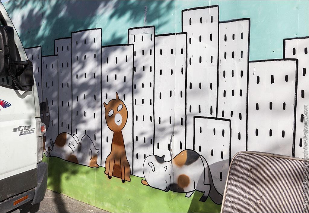 кот котофото Иерусалим граффити