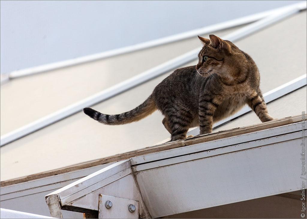 кот котофото Изаиль Эйлат