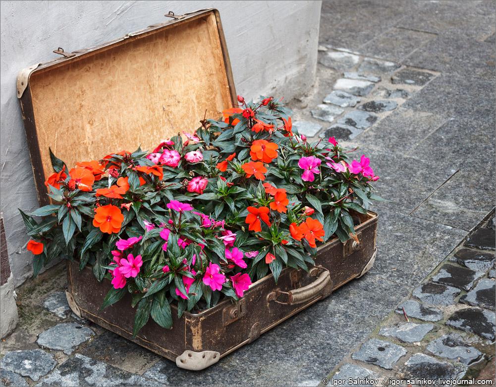 Львов цветок цветы чемодан