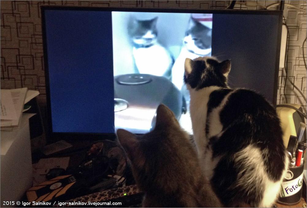 котофото котики