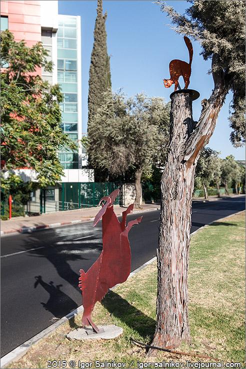 котофото Израиль Кармиэль