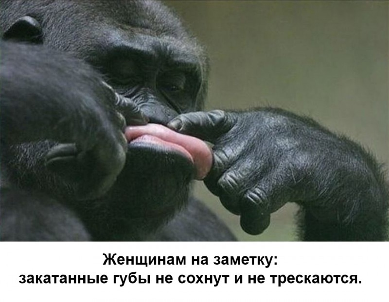 #юмор #картинкидляграмотных