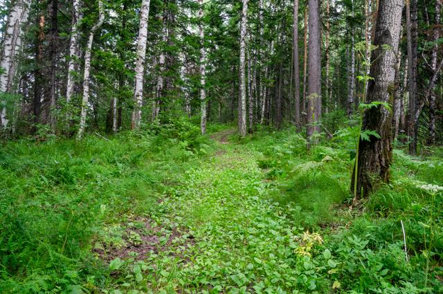 Нет ничего лучше старой лесной дороги, поросшей мягкой травой.