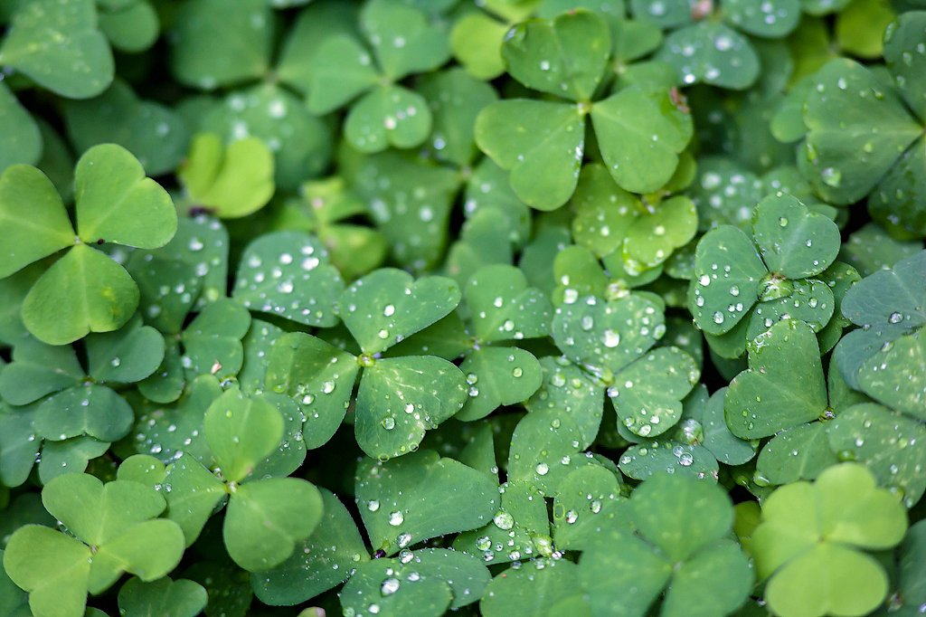 Водные растения для пруда фото с названиями нее великолепная