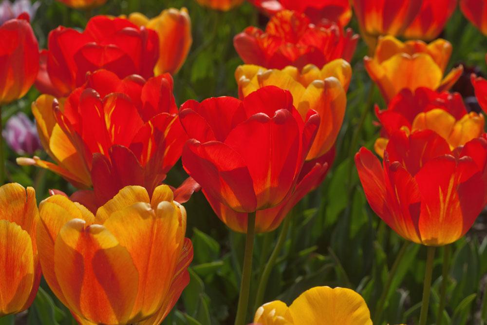 3.Orange-Queen.jpg