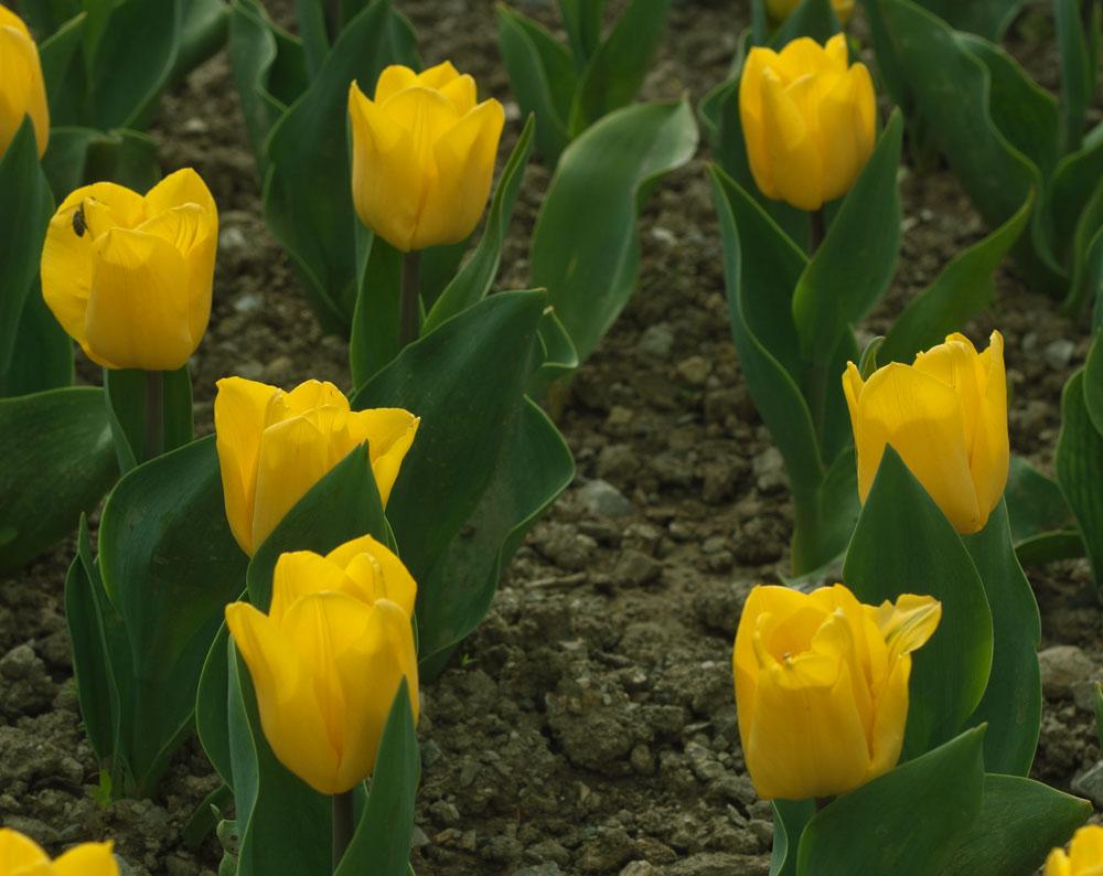 24.Yellow-Flicht.jpg