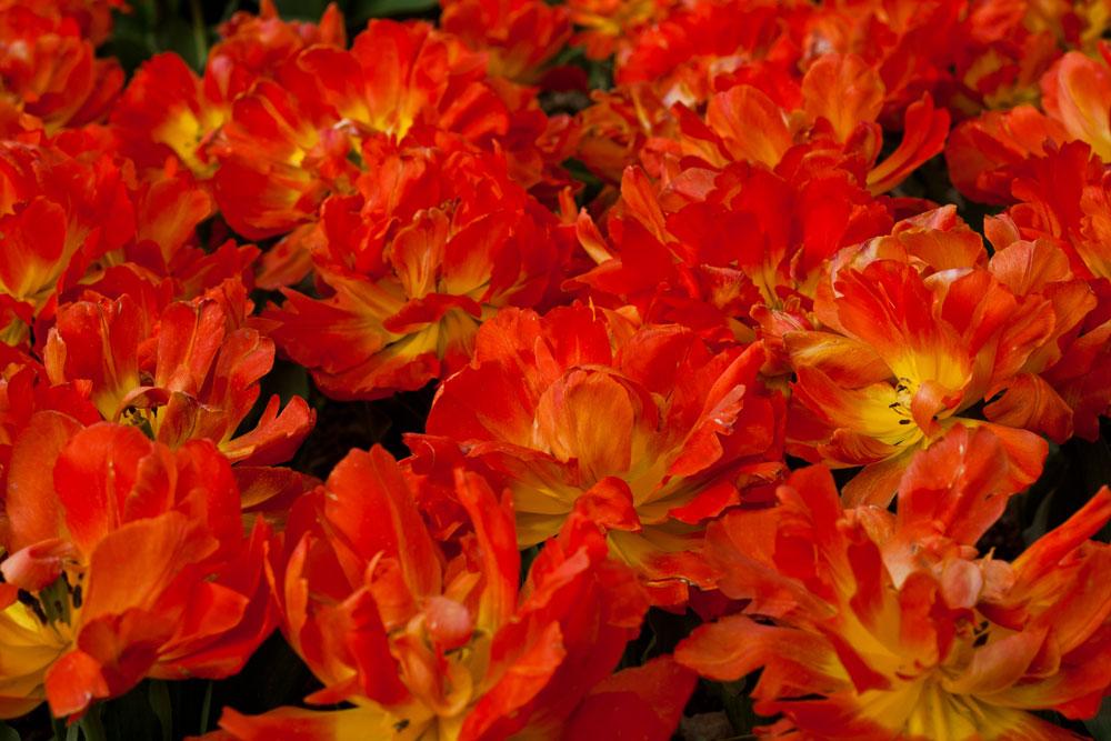 25.Monte-Orange.jpg