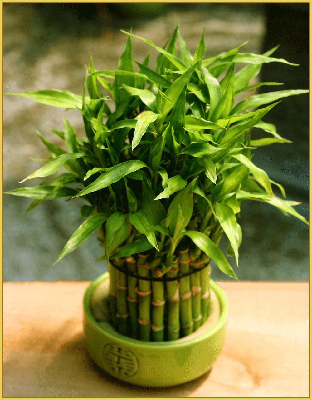 Бамбук-5-лет.jpg