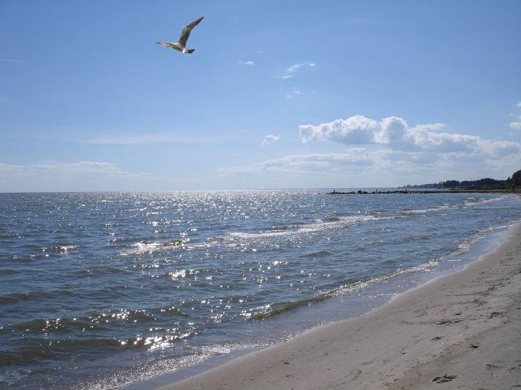фото море чайки