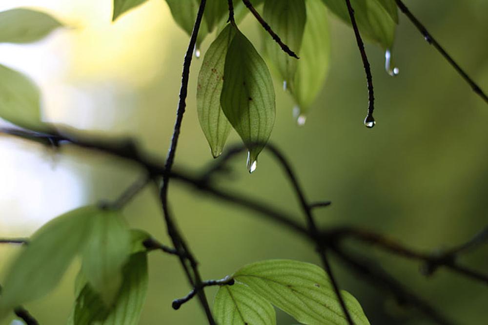 капли дождя.jpg