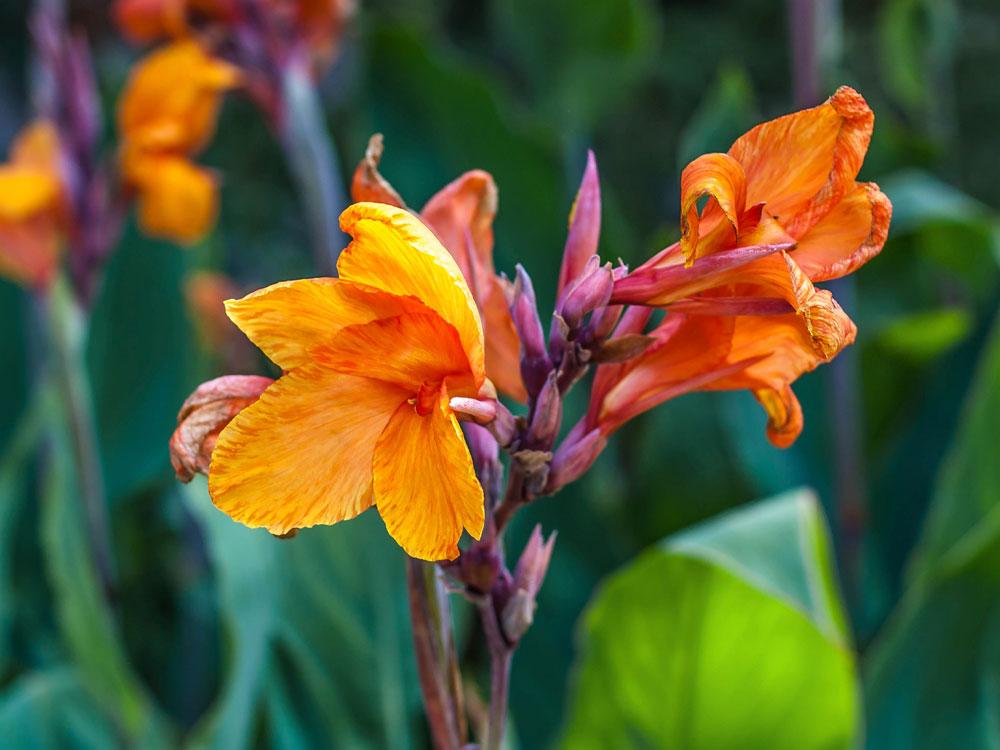7.Orange-Perfection.jpg
