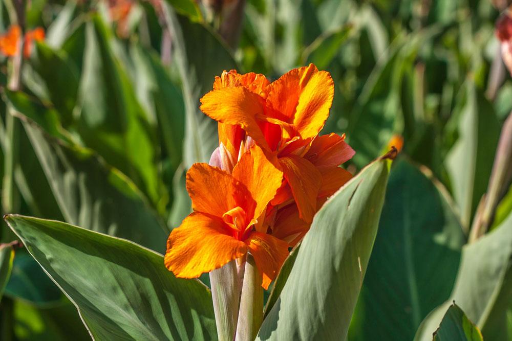 9.Orange-Beauty.jpg