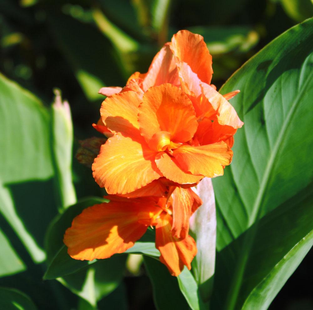 Orange-Beauty.jpg