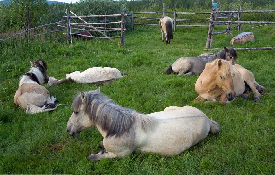 horses very original