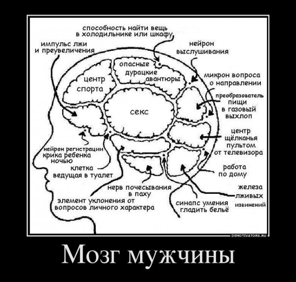 515463_mozg-muzhchinyi (1)