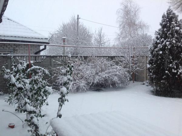 газон под снегом