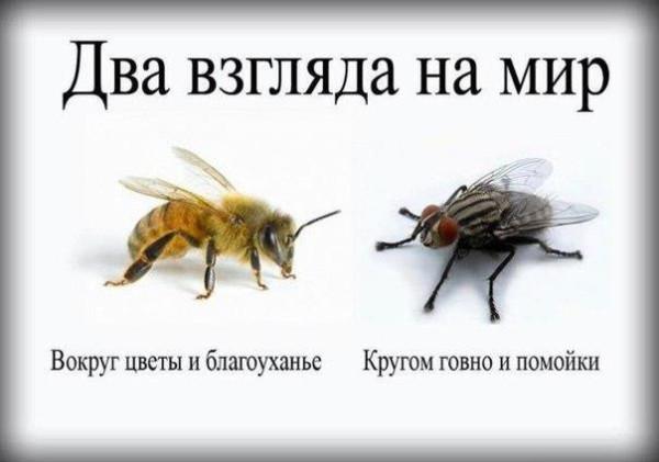 Пчела-и-муха