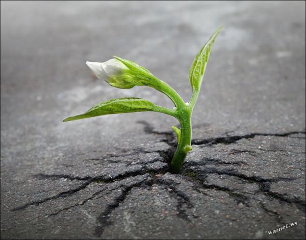 цветок на асфальте