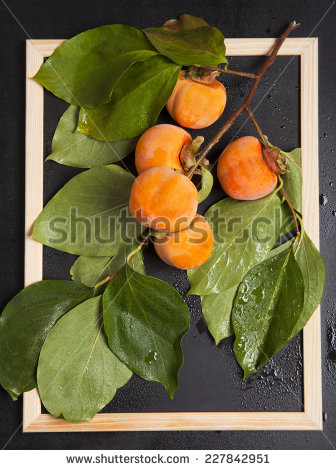 stock-photo-wet-persimmon-fruit-on-the-branch-227842951