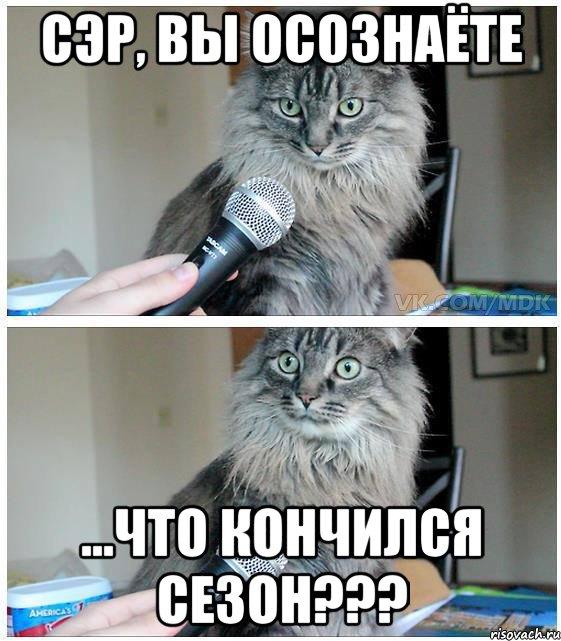 kot-ser-vy-osoznaete_34956095_orig_