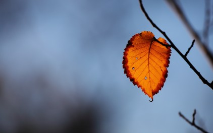 autumn-free-wallpaper-last-autumn-leaf_422_93130