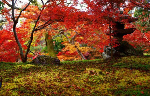 osenny-kioto-11
